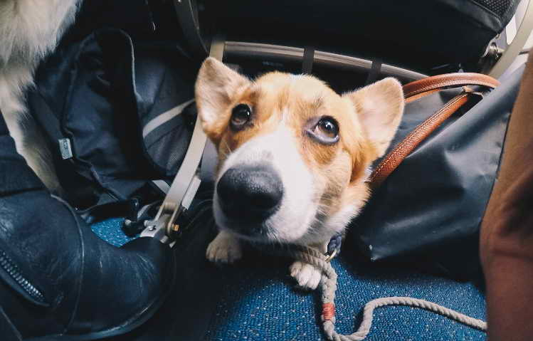 Service Dog Registration Texas