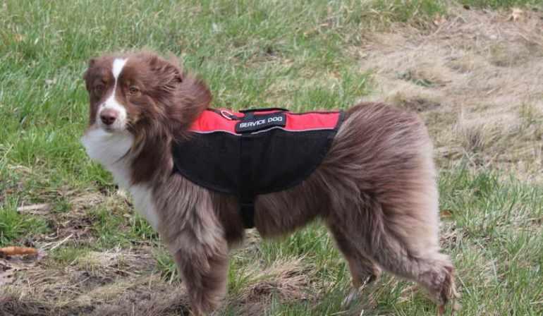 Usa Service Dog Registration Reviews