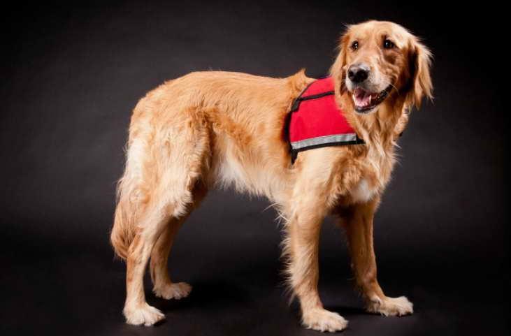 Usdr Service Dog