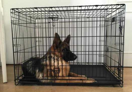 crate size for german shepherd