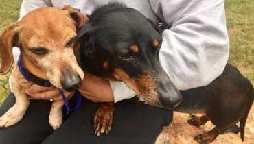 sc dachshund rescue