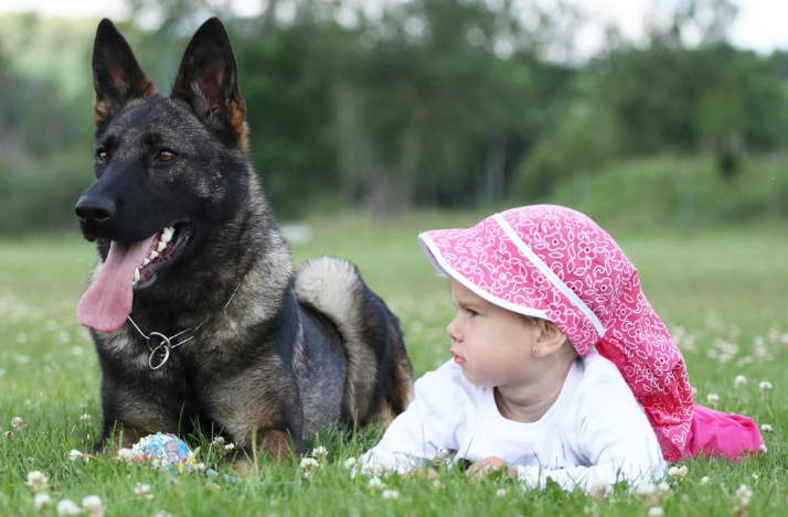 buying a trained german shepherd