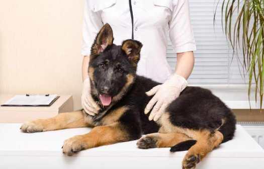 german shepherd neurological disorders