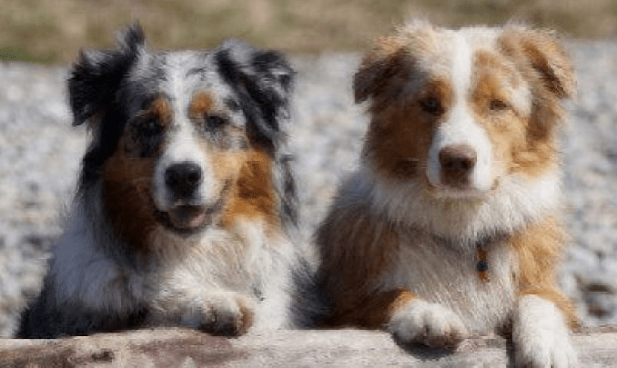 The Insider Secret on Medium Sized Dogs Revealed