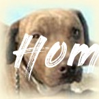 Adopt a dog or cat from Home at Last Animal Rescue! - Home At Last Dog Rescue