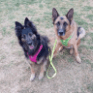 The Story Of Types Of Shepherd Dogs Has Just Gone Viral!   Types Of Shepherd Dogs