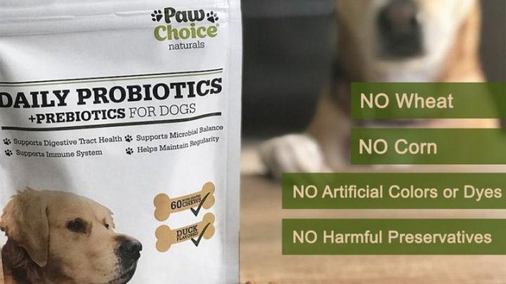 Probiotics For Dogs Information