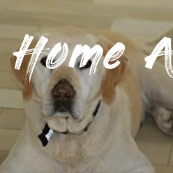 Rescued: What Second-Chance Dogs Teach Us About Living with  - Home At Last Dog Rescue