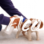 Some Of The Known Sand Flea Bites Dogs Symptoms - TOODLE HUB - Flea Bites On Dogs