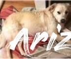 5 Facts About Arizona Small Dog Rescue That Will Blow Your Mind | Arizona Small Dog Rescue
