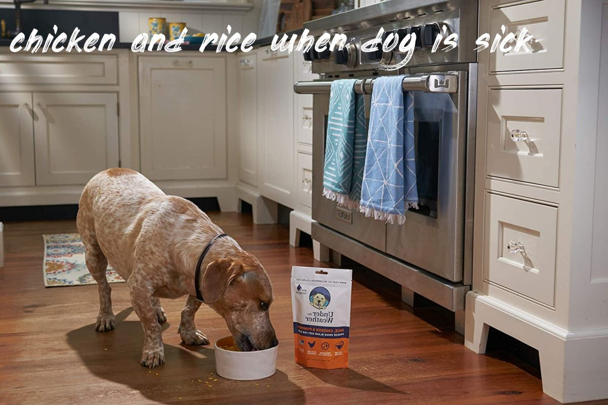Question about chicken and rice when dog is sick