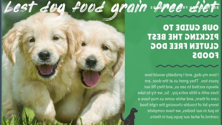 Best Dog Food Grain Free Diet