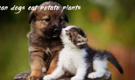 Things you should know can dogs eat potato plants