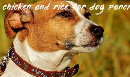 Things you should know chicken and rice for dog pancreatitis