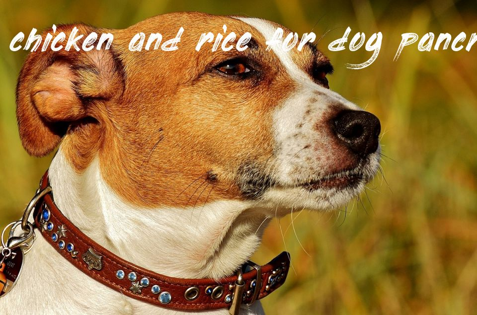 Chicken And Rice For Dog Pancreatitis
