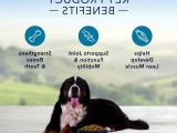 All you need to know about benefits of chicken and rice for dogs