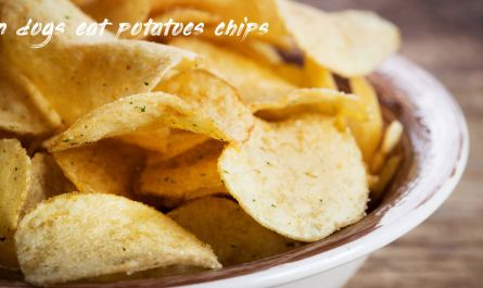 Short information about can dogs eat potatoes chips