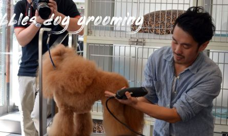 bubbles dog grooming Price