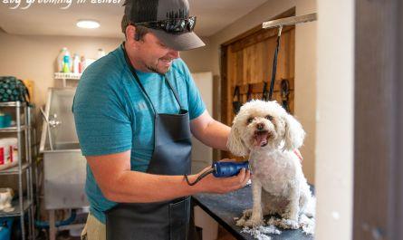 dog grooming in denver