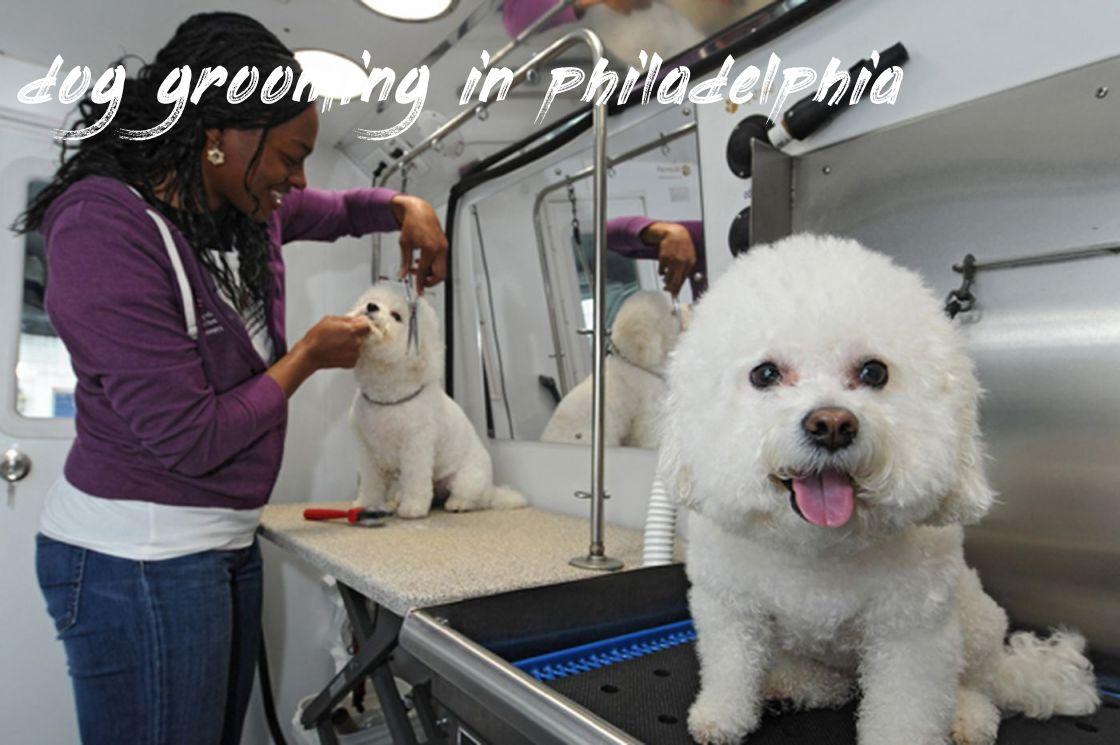 Dog Grooming In Philadelphia Buyer Guide