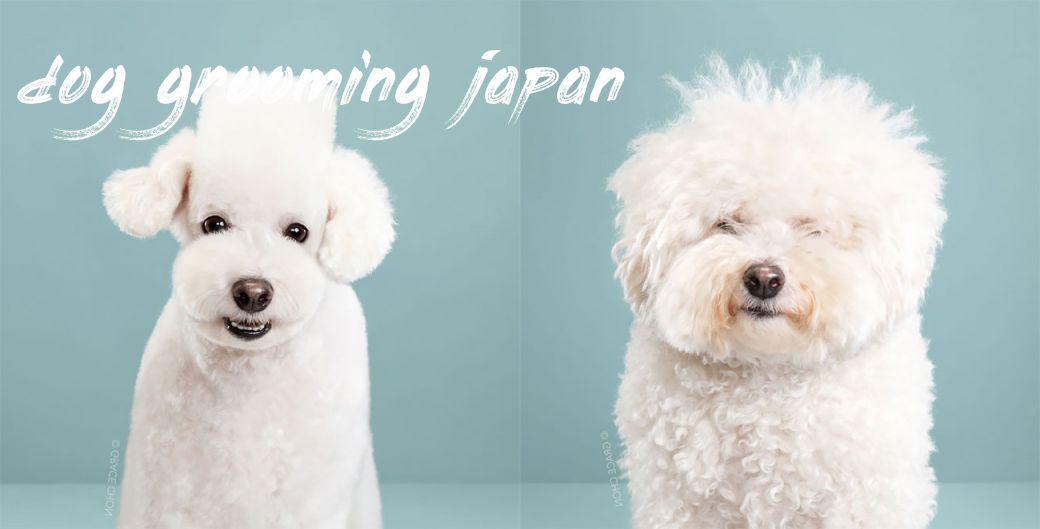 Dog Grooming Japan Cost