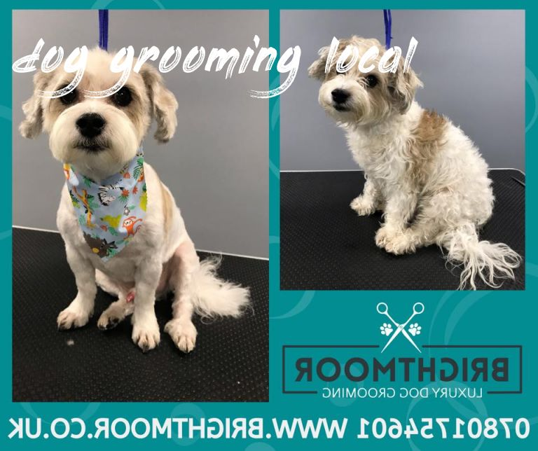 dog grooming local Buyer Guide