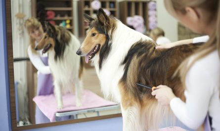 dog grooming salary Review