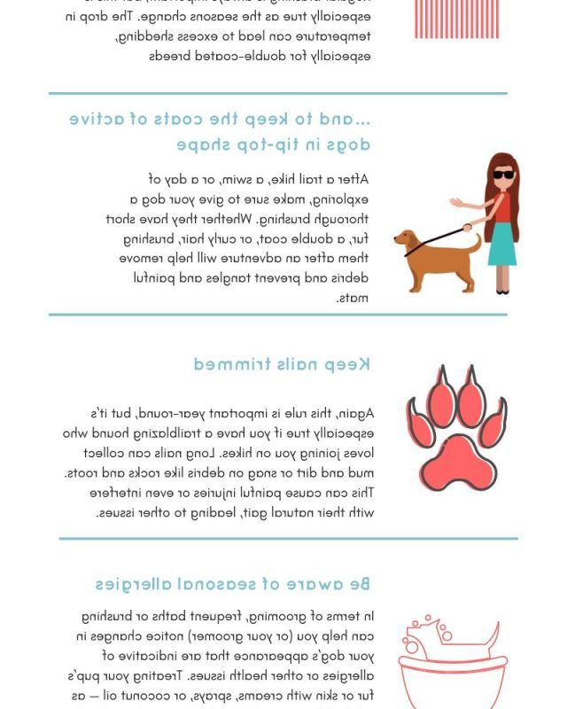 Dog Grooming Tip Recommended