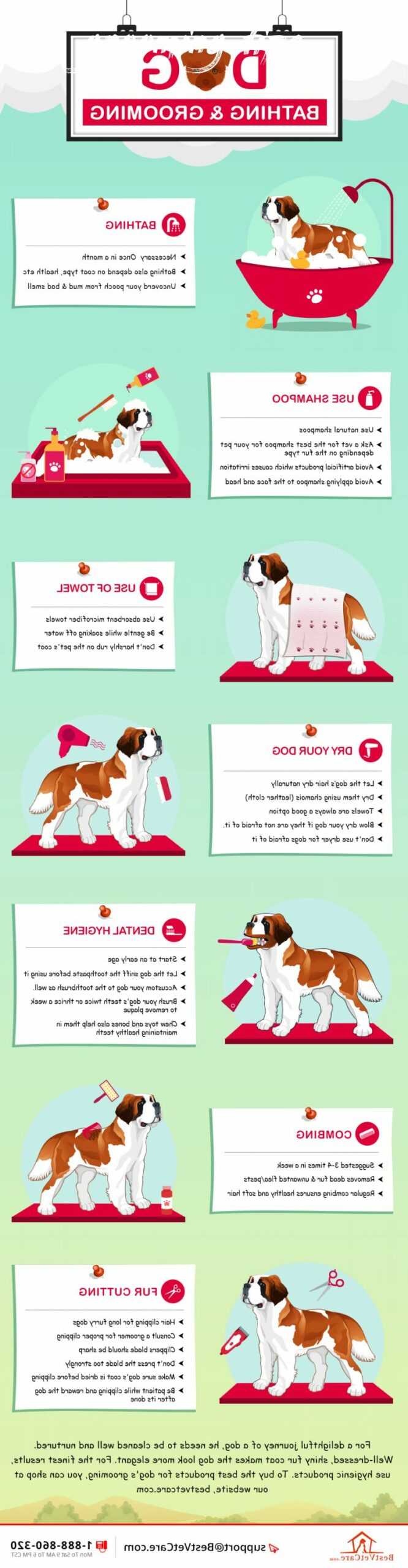 dog grooming tips Overview