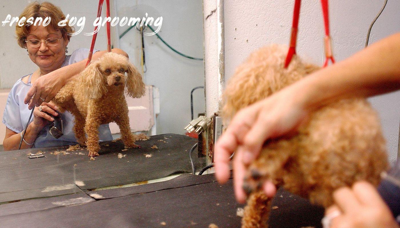Fresno Dog Grooming Buyer