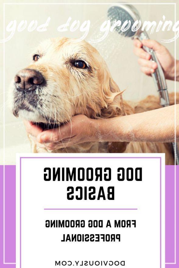 good dog grooming Buyer