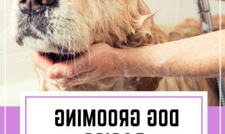 good dog grooming Buyer Guide