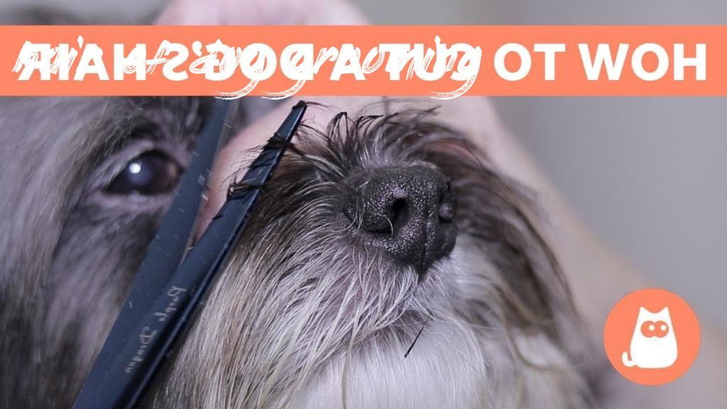 hair of dog grooming Overview