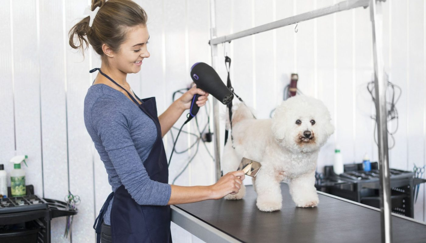 Jobs For Dog Grooming Overview
