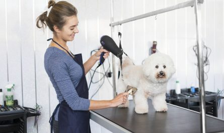 jobs for dog grooming Recommended