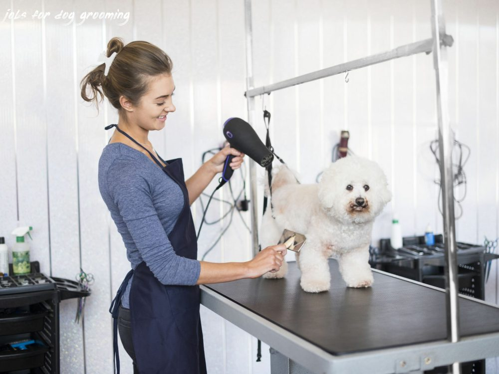 jobs for dog grooming Where To Find