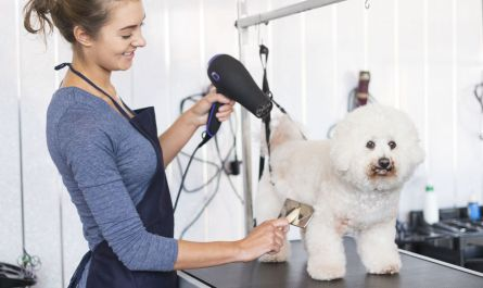 local mobile dog grooming Recommended