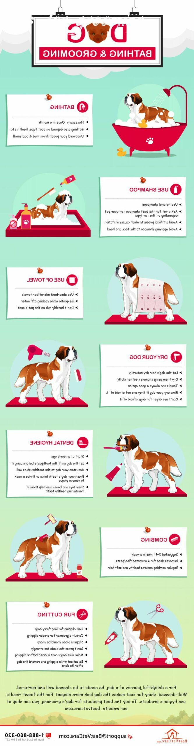 tips dog grooming Review