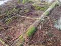 skogen11