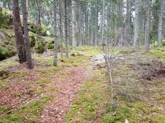 skogen2