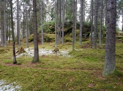 skogen6
