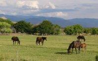P1010622-horses