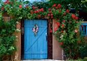 Roses in Tulie