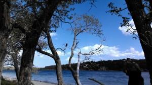 Lake Waterton 2