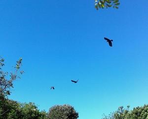 Neighborhood birds in flight