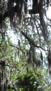 City Park New Orleans