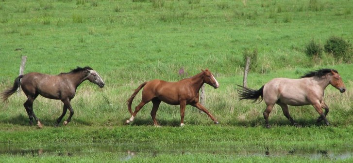 gray, chestnut, and bay roan horse