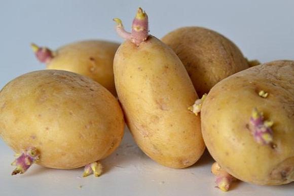 cara pilih kentang, jangan makan kentang dah bertunas, bahaya kentang bertunas, kebaikan makan kentang, tip beli kentang, kentang bertunas
