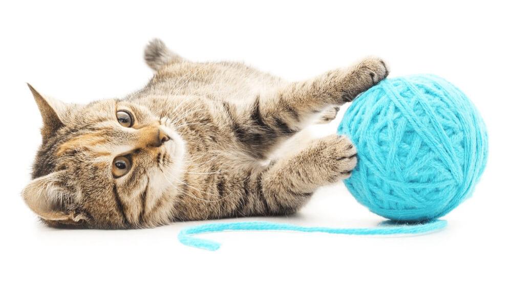 Perché è importante giocare con il proprio gatto