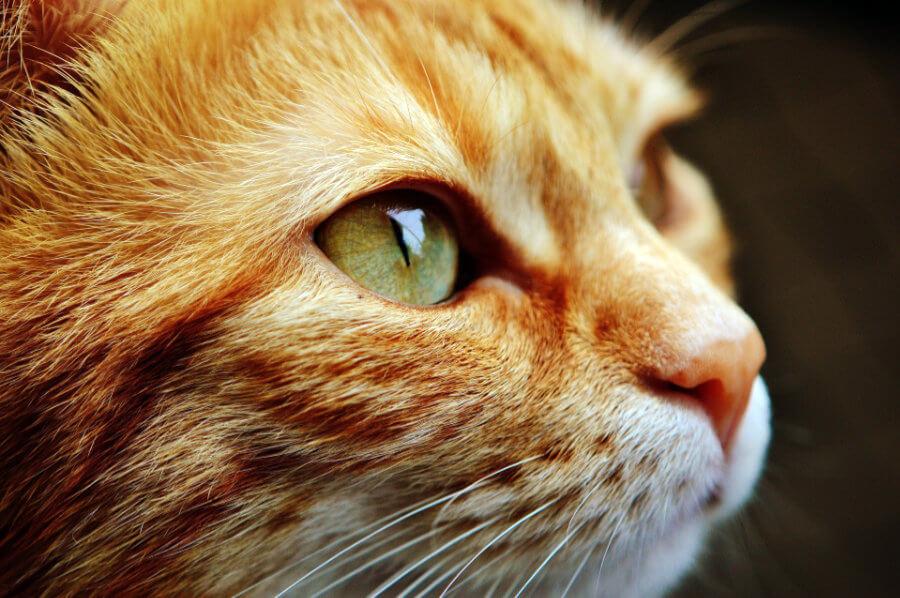 10 Modi Per Capire Se Il Tuo Gatto è Felice Petvalley